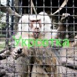 Сетки для клеток обезьян